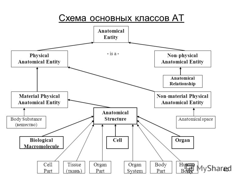 40 Схема основных классов АТ Anatomical Entity Physical Anatomical Entity Non-physical Anatomical Entity Material Physical Anatomical Entity Non-material Physical Anatomical Entity Anatomical Relationship - is a - Anatomical spaceBody Substance (веще