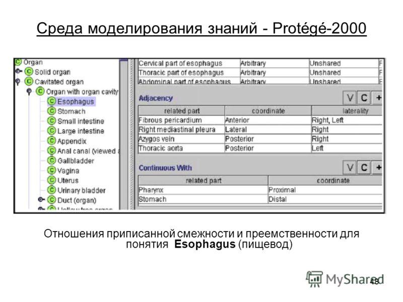 48 Среда моделирования знаний - Protégé-2000 Отношения приписанной смежности и преемственности для понятия Esophagus (пищевод)