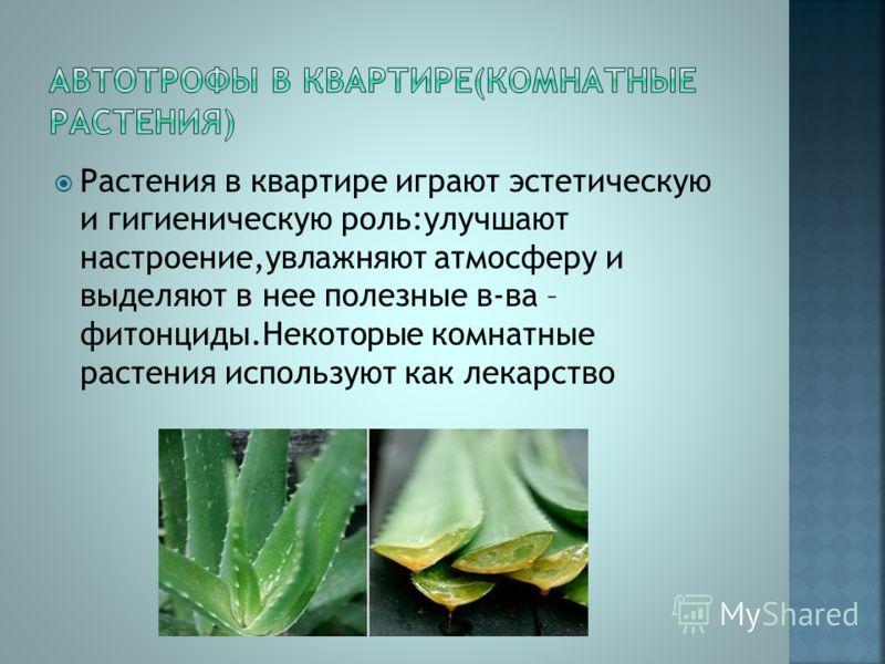 Растения в квартире играют эстетическую и гигиеническую роль:улучшают настроение,увлажняют атмосферу и выделяют в нее полезные в-ва – фитонциды.Некоторые комнатные растения используют как лекарство
