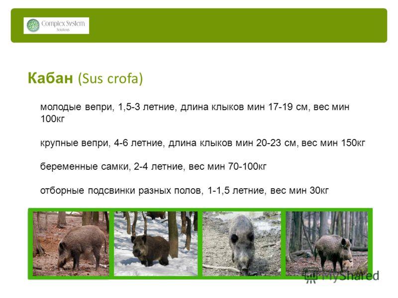 Кабан (Sus crofa) молодые вепри, 1,5-3 летние, длина клыков мин 17-19 см, вес мин 100кг крупные вепри, 4-6 летние, длина клыков мин 20-23 см, вес мин 150кг беременные самки, 2-4 летние, вес мин 70-100кг отборные подсвинки разных полов, 1-1,5 летние,