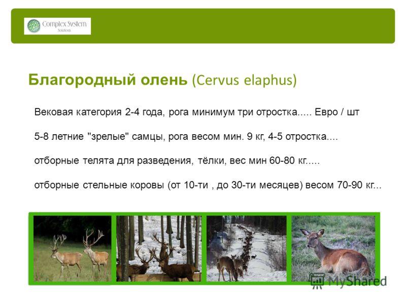 Благородный олень (Cervus elaphus) Вековая категория 2-4 года, рога минимум три отростка..... Евро / шт 5-8 летние