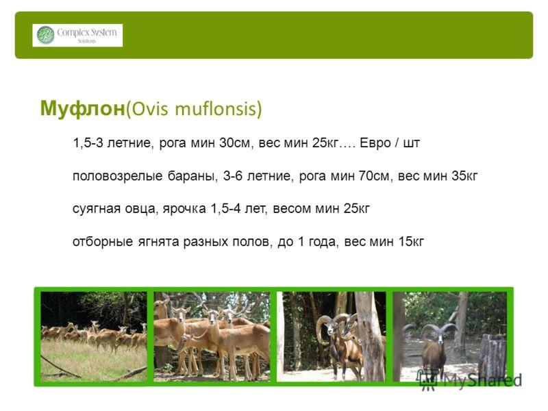Муфлон (Ovis muflonsis) 1,5-3 летние, рога мин 30см, вес мин 25кг…. Евро / шт половозрелые бараны, 3-6 летние, рога мин 70см, вес мин 35кг суягная овца, ярочка 1,5-4 лет, весом мин 25кг отборные ягнята разных полов, до 1 года, вес мин 15кг