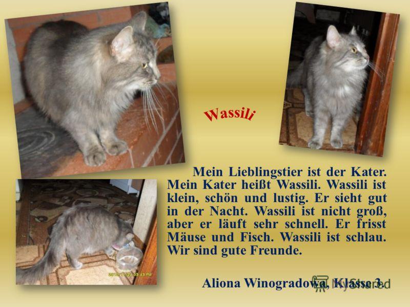 Mein Lieblingstier ist der Kater. Mein Kater heißt Wassili. Wassili ist klein, schön und lustig. Er sieht gut in der Nacht. Wassili ist nicht groß, aber er läuft sehr schnell. Er frisst Mäuse und Fisch. Wassili ist schlau. Wir sind gute Freunde. Alio