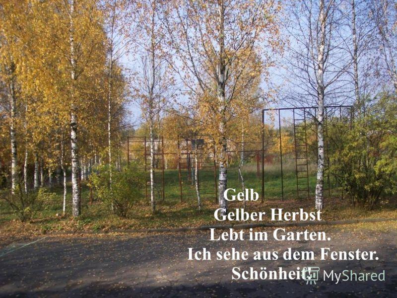 Herbst Gold Golder Herbst Lebt im Garten. Ich sehe aus dem Fenster. Schönheit! Gelb Gelber Herbst Lebt im Garten. Ich sehe aus dem Fenster. Schönheit!