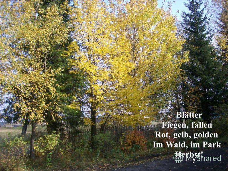 Blätter Fiegen, fallen Rot, gelb, golden Im Wald, im Park Herbst!