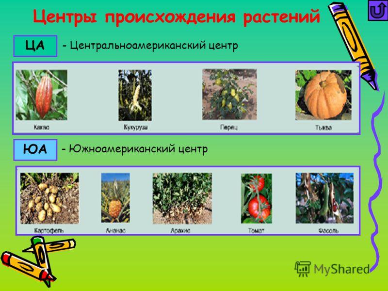 Центры происхождения растений ЦА ЮА - Южноамериканский центр - Центральноамериканский центр