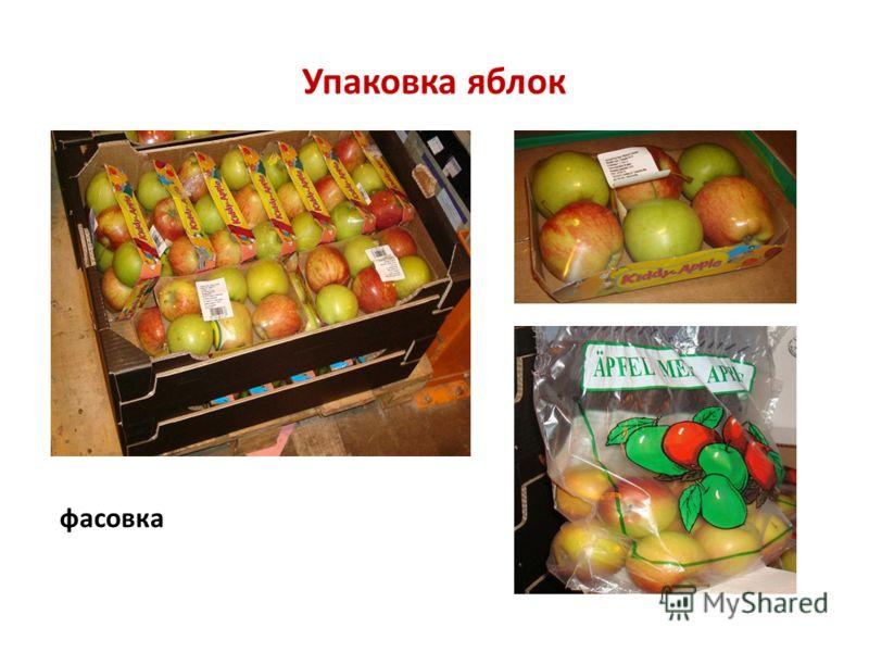 Упаковка яблок фасовка