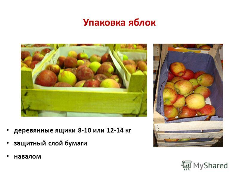 Упаковка яблок деревянные ящики 8-10 или 12-14 кг защитный слой бумаги навалом