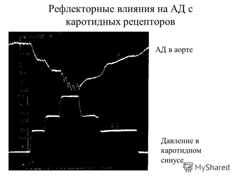 Рефлекторные влияния на АД с каротидных рецепторов АД в аорте Давление в каротидном синусе