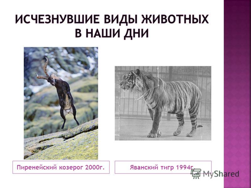 Пиренейский козерог 2000г.Яванский тигр 1994г.