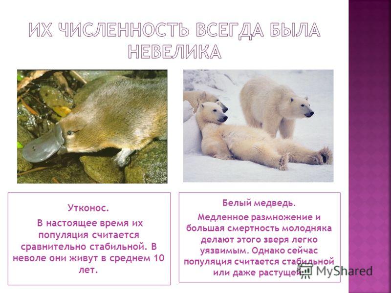 Утконос. В настоящее время их популяция считается сравнительно стабильной. В неволе они живут в среднем 10 лет. Белый медведь. Медленное размножение и большая смертность молодняка делают этого зверя легко уязвимым. Однако сейчас популяция считается с