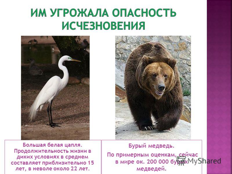 Большая белая цапля. Продолжительность жизни в диких условиях в среднем составляет приблизительно 15 лет, в неволе около 22 лет. Бурый медведь. По примерным оценкам, сейчас в мире ок. 200 000 бурых медведей.