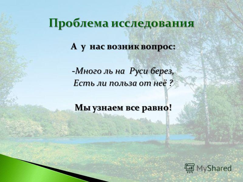 А у нас возник вопрос: -Много ль на Руси берез, Есть ли польза от неё ? Мы узнаем все равно!