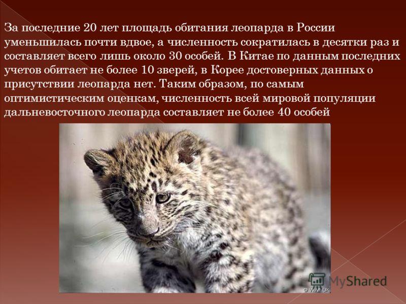 За последние 20 лет площадь обитания леопарда в России уменьшилась почти вдвое, а численность cократилась в десятки раз и составляет всего лишь около 30 особей. В Китае по данным последних учетов обитает не более 10 зверей, в Корее достоверных данных