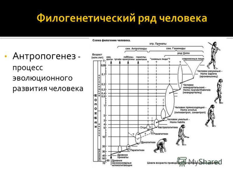 Антропогенез - процесс эволюционного развития человека