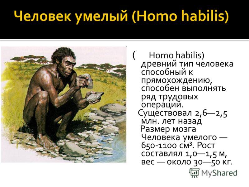 ( Homo habilis) древний тип человека способный к прямохождению, способен выполнять ряд трудовых операций. Существовал 2,62,5 млн. лет назад Размер мозга Человека умелого 650-1100 см³. Рост составлял 1,01,5 м, вес около 3050 кг.