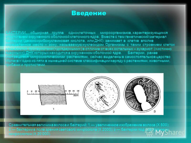 Реферат по биологии на тему вирусы и бактерии 7219