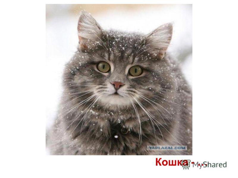 Кошка - …