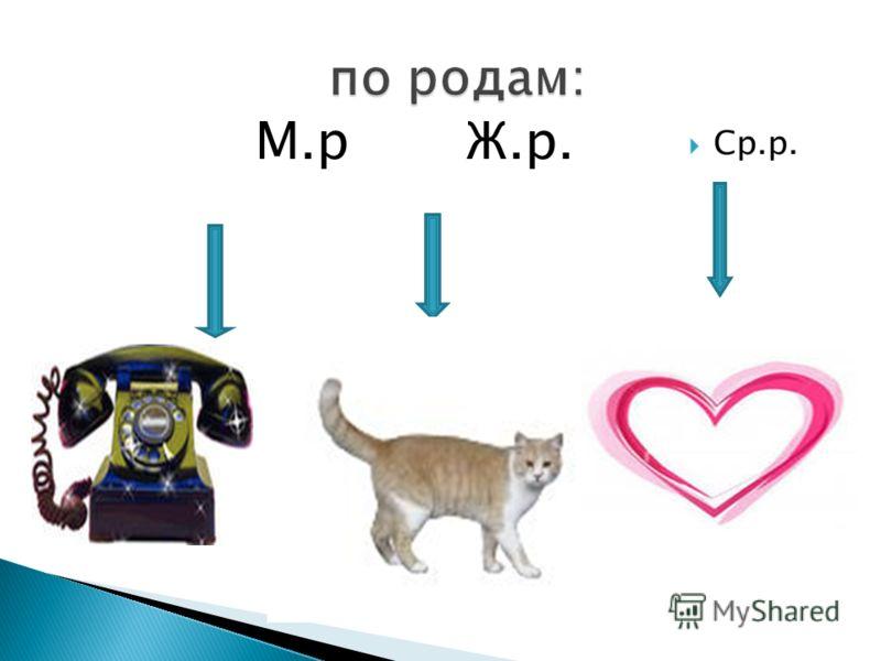 М.р Ж.р.