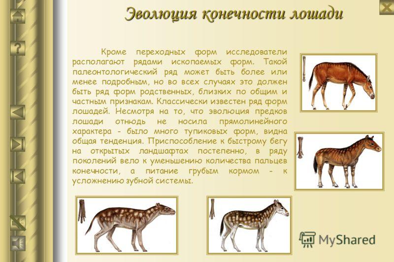Археоптерикс Археоптерикс в движении Слепок археоптерикса Представитель отряда млекопитающих и археоптерикс
