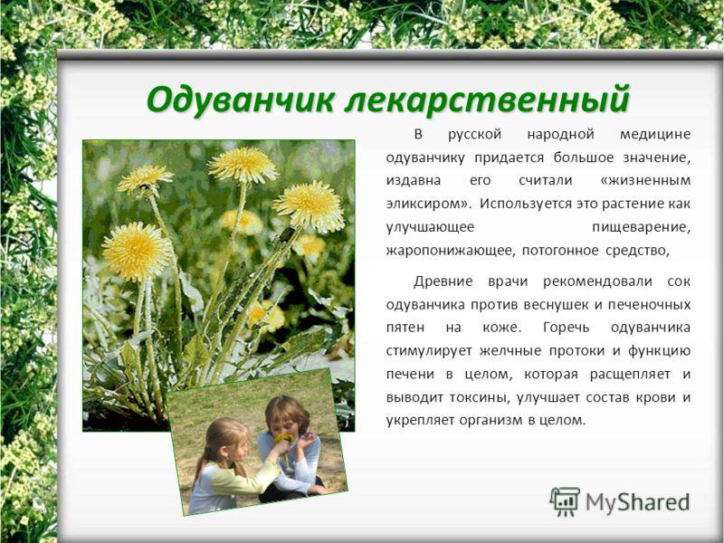 Одуванчик лекарственный В русской народной медицине одуванчику придается большое значение, издавна его считали «жизненным эликсиром». Используется это растение как улучшающее пищеварение, жаропонижающее, потогонное средство, Древние врачи рекомендова