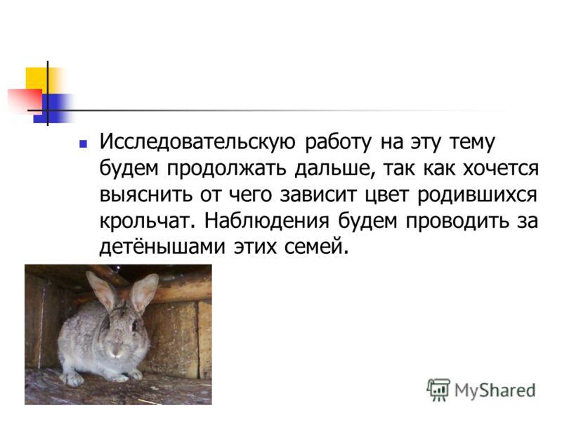 Исследовательскую работу на эту тему будем продолжать дальше, так как хочется выяснить от чего зависит цвет родившихся крольчат. Наблюдения будем проводить за детёнышами этих семей.