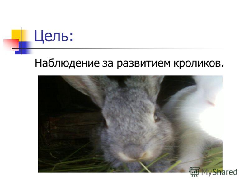 Цель: Наблюдение за развитием кроликов.