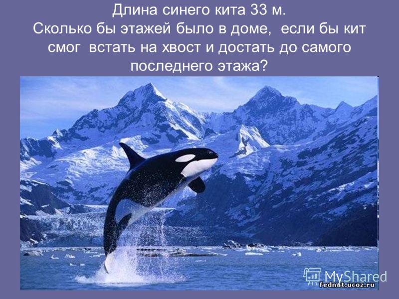 Длина синего кита 33 м. Сколько бы этажей было в доме, если бы кит смог встать на хвост и достать до самого последнего этажа?