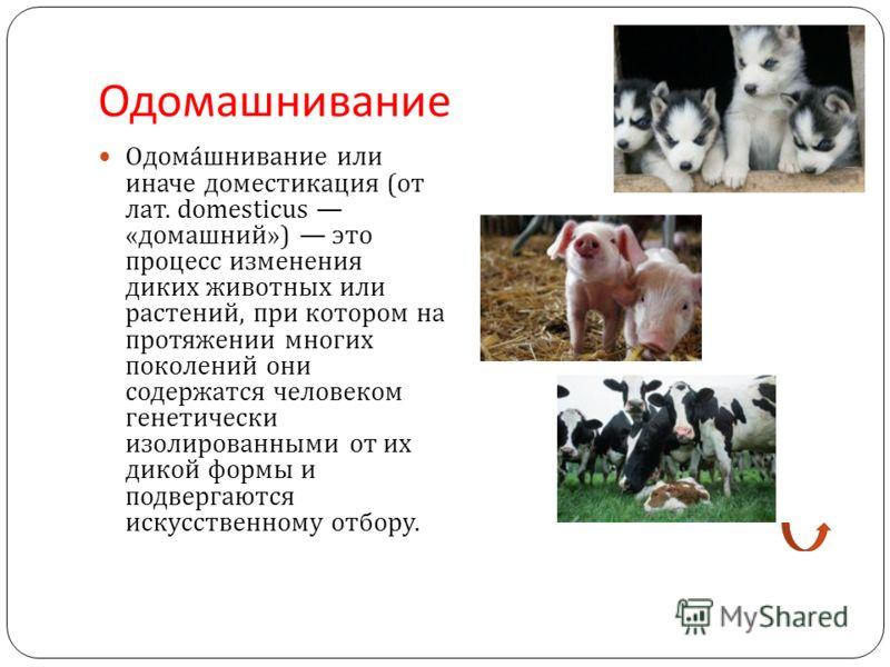 Одомашнивание Одомашнивание или иначе доместикация ( от лат. domesticus « домашний ») это процесс изменения диких животных или растений, при котором на протяжении многих поколений они содержатся человеком генетически изолированными от их дикой формы