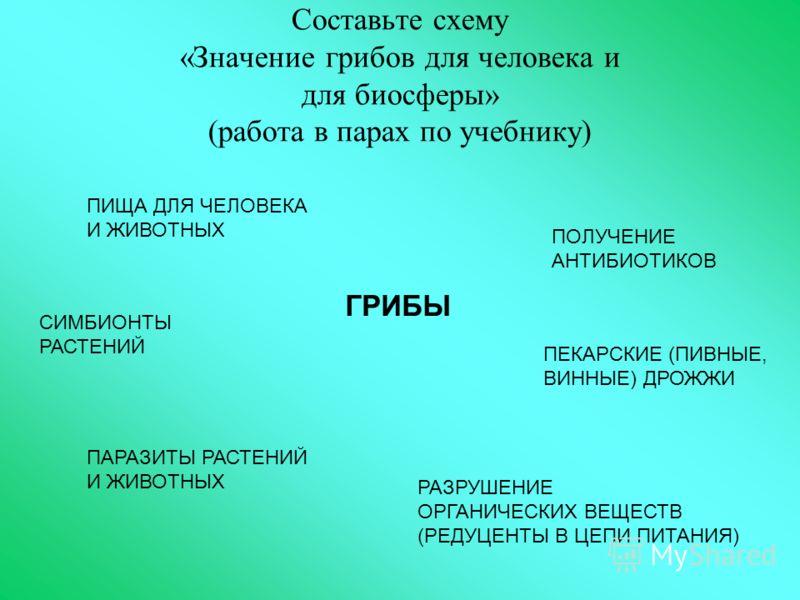 Составьте схему «Значение грибов для человека и для биосферы» (работа в парах по учебнику) ГРИБЫ ПИЩА ДЛЯ ЧЕЛОВЕКА И ЖИВОТНЫХ ПОЛУЧЕНИЕ АНТИБИОТИКОВ ПЕКАРСКИЕ (ПИВНЫЕ, ВИННЫЕ) ДРОЖЖИ РАЗРУШЕНИЕ ОРГАНИЧЕСКИХ ВЕЩЕСТВ (РЕДУЦЕНТЫ В ЦЕПИ ПИТАНИЯ) ПАРАЗИТЫ