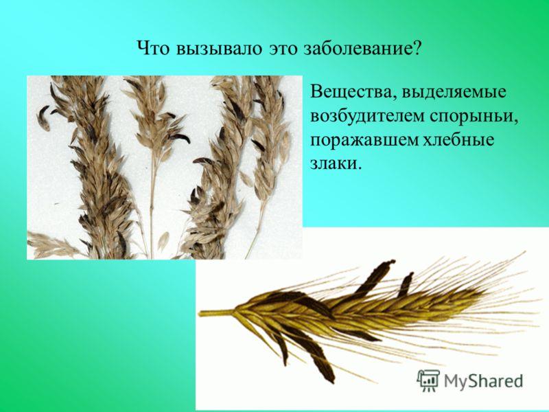 Что вызывало это заболевание? Вещества, выделяемые возбудителем спорыньи, поражавшем хлебные злаки.