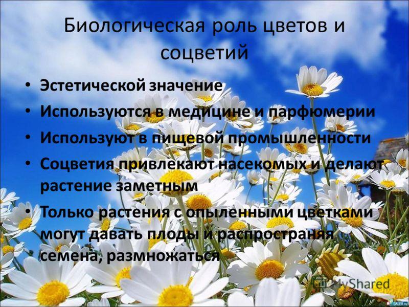 Биологическая роль цветов и соцветий Эстетической значение Используются в медицине и парфюмерии Используют в пищевой промышленности Соцветия привлекают насекомых и делают растение заметным Только растения с опыленными цветками могут давать плоды и ра