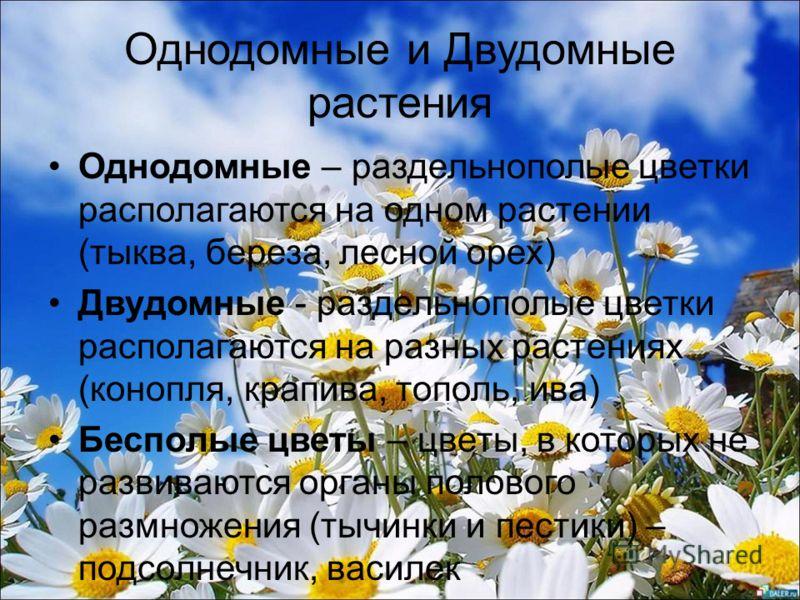 Однодомные и Двудомные растения Однодомные – раздельнополые цветки располагаются на одном растении (тыква, береза, лесной орех) Двудомные - раздельнополые цветки располагаются на разных растениях (конопля, крапива, тополь, ива) Бесполые цветы – цветы