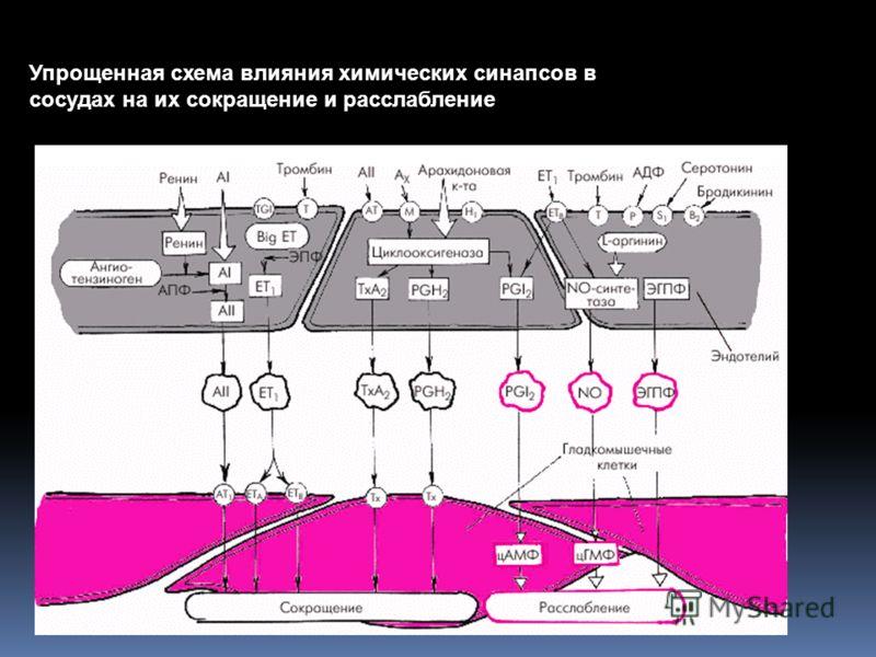 Упрощенная схема влияния химических синапсов в сосудах на их сокращение и расслабление