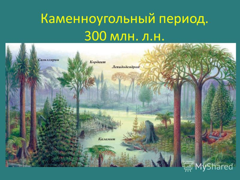 Каменноугольный период. 300 млн. л.н.