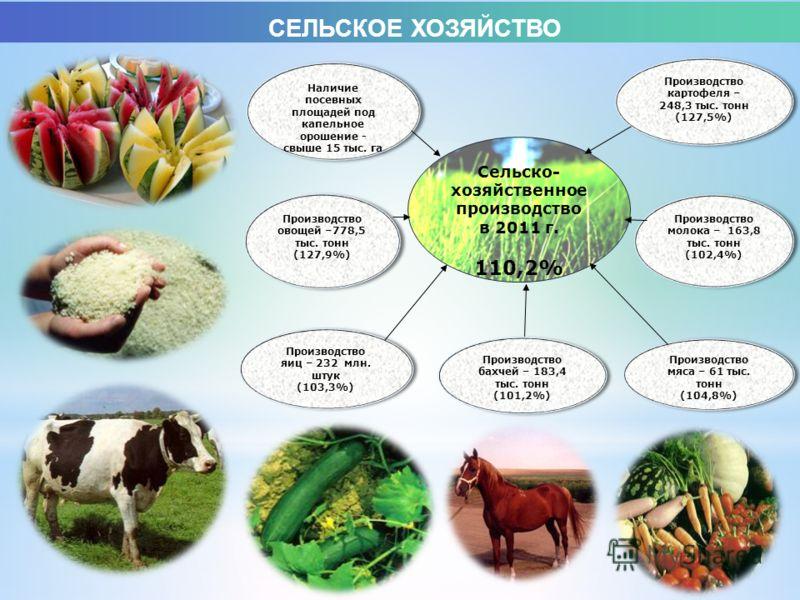 Наличие посевных площадей под капельное орошение - свыше 15 тыс. га Производство овощей –778,5 тыс. тонн (127,9%) Производство овощей –778,5 тыс. тонн (127,9%) Производство яиц – 232 млн. штук (103,3%) Производство яиц – 232 млн. штук (103,3%) Произв