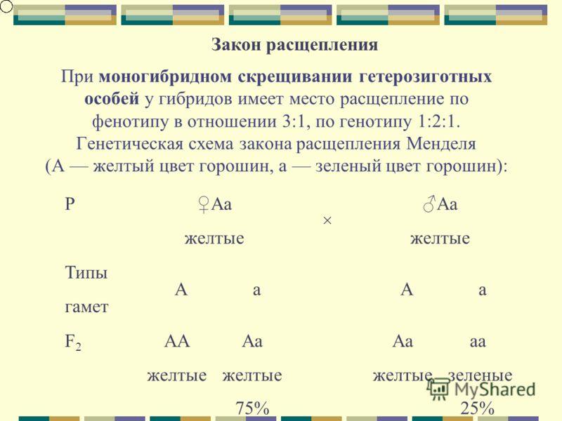 При моногибридном скрещивании гетерозиготных особей у гибридов имеет место расщепление по фенотипу в отношении 3:1, по генотипу 1:2:1. Генетическая схема закона расщепления Менделя (А желтый цвет горошин, а зеленый цвет горошин): Закон расщепления P