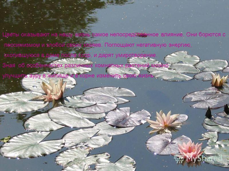 Цветы оказывают на нашу жизнь самое непосредственное влияние. Они борются с пессимизмом и злобой своих хозяев. Поглощают негативную энергию, скопившуюся в доме после ссор, и дарят умиротворение. Зная об особенностях различных комнатных растений можно