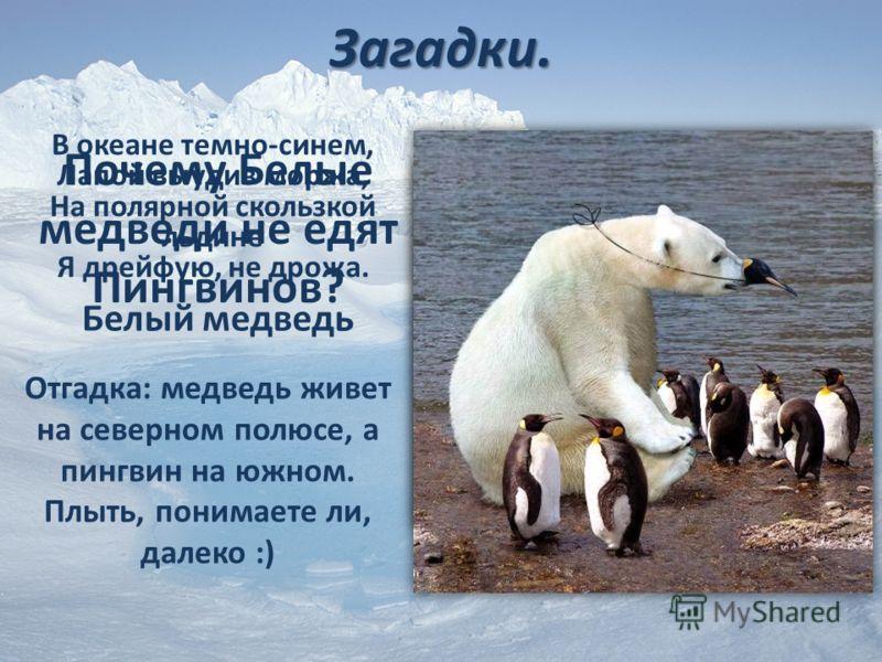 Загадки. В океане темно-синем, Лапой выудив моржа, На полярной скользкой льдине Я дрейфую, не дрожа. Белый медведь Почему Белые медведи не едят Пингвинов? Отгадка: медведь живет на северном полюсе, а пингвин на южном. Плыть, понимаете ли, далеко :)