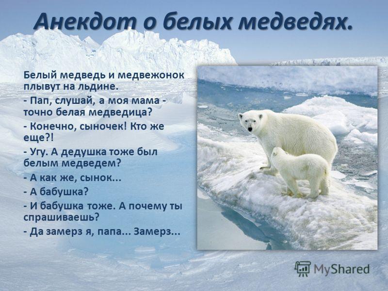 Анекдот о белых медведях. Белый медведь и медвежонок плывут на льдине. - Пап, слушай, а моя мама - точно белая медведица? - Конечно, сыночек! Кто же еще?! - Угу. А дедушка тоже был белым медведем? - А как же, сынок... - А бабушка? - И бабушка тоже. А
