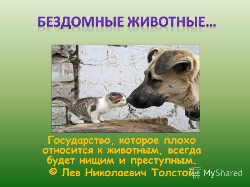 Государство, которое плохо относится к животным, всегда будет нищим и преступным. © Лев Николаевич Толстой