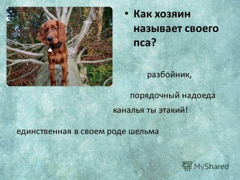 Как хозяин называет своего пса? порядочный надоеда каналья ты этакий! единственная в своем роде шельма разбойник,