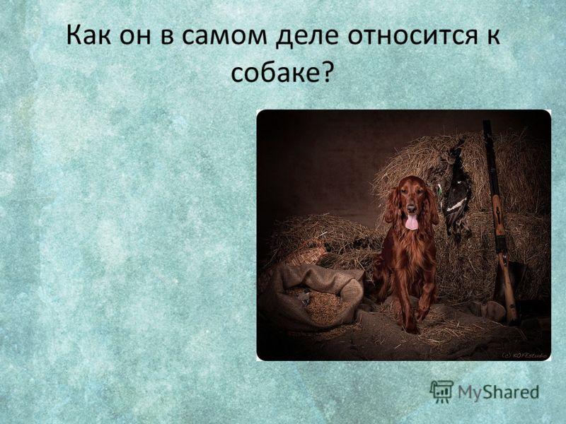 Как он в самом деле относится к собаке?