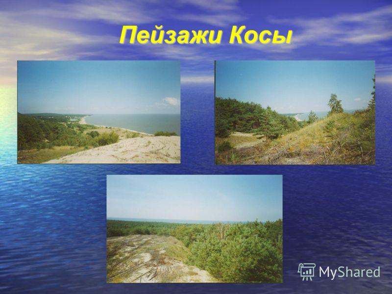 Пейзажи Косы