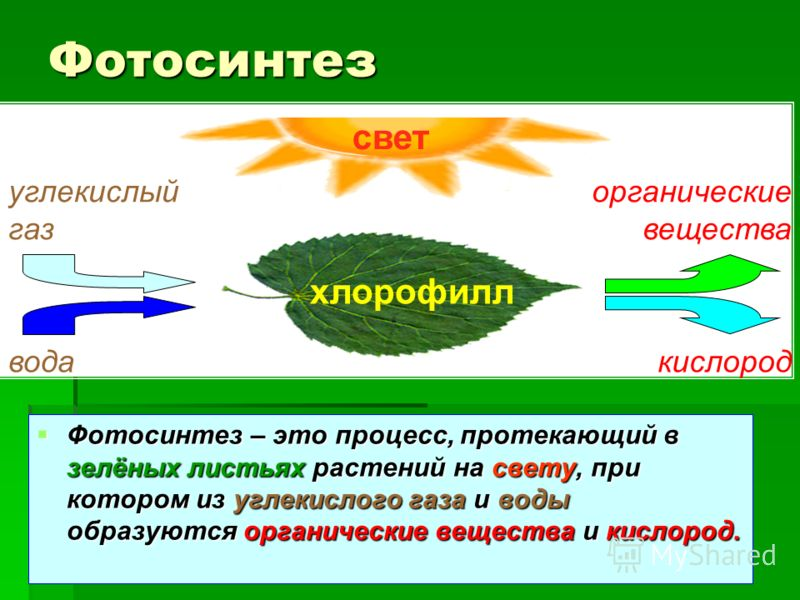 Фотосинтез – это процесс, протекающий в зелёных листьях растений на свету, при котором из углекислого газа и воды образуются органические вещества и кислород. Фотосинтез – это процесс, протекающий в зелёных листьях растений на свету, при котором из у