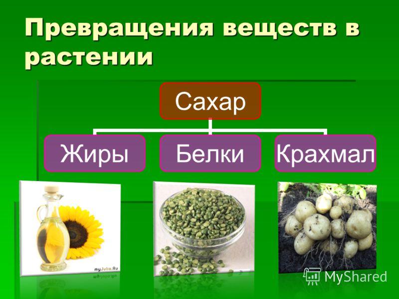 Превращения веществ в растении Сахар ЖирыБелкиКрахмал