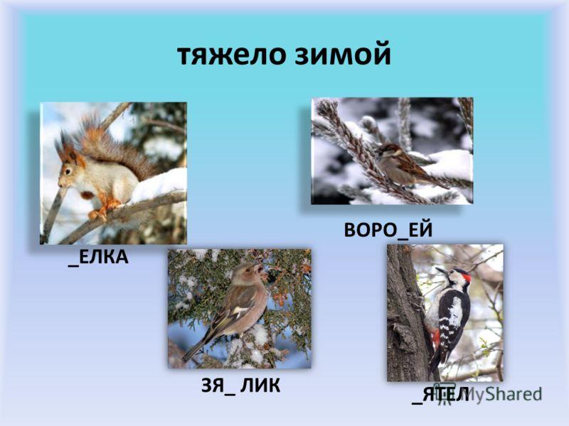 снежная _а_а
