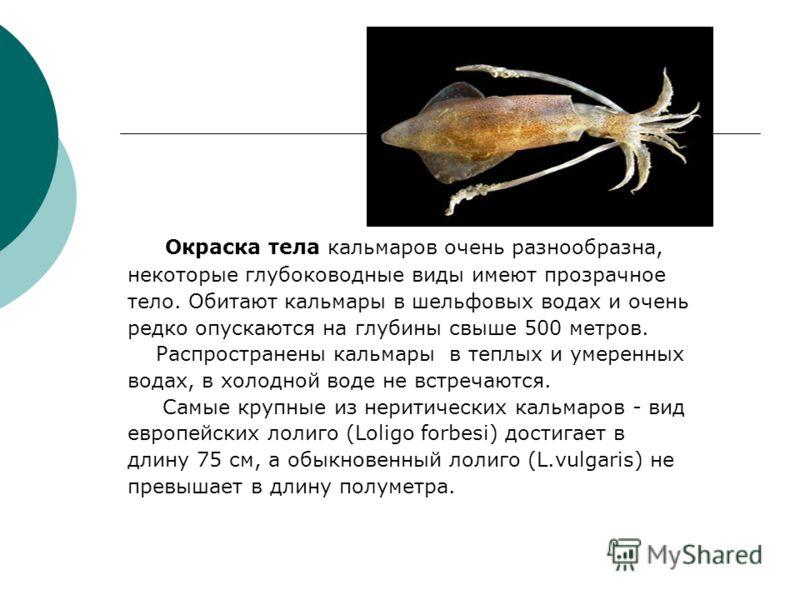 Окраска тела кальмаров очень разнообразна, некоторые глубоководные виды имеют прозрачное тело. Обитают кальмары в шельфовых водах и очень редко опускаются на глубины свыше 500 метров. Распространены кальмары в теплых и умеренных водах, в холодной вод
