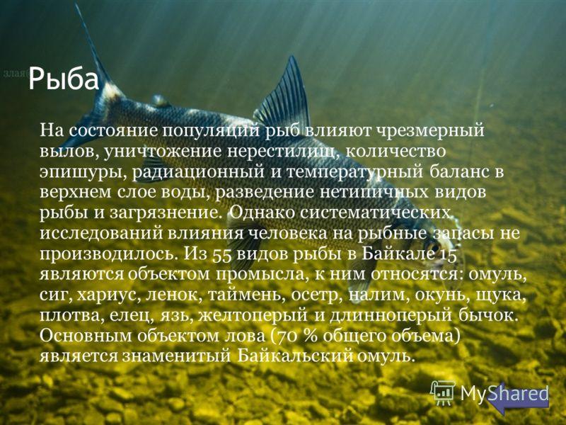 Рыба На состояние популяций рыб влияют чрезмерный вылов, уничтожение нерестилищ, количество эпишуры, радиационный и температурный баланс в верхнем слое воды, разведение нетипичных видов рыбы и загрязнение. Однако систематических исследований влияния
