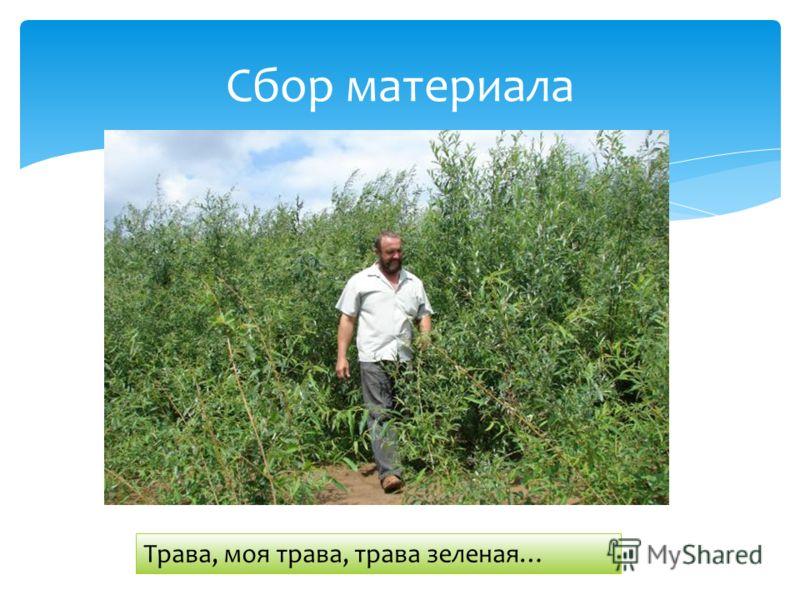 Сбор материала Трава, моя трава, трава зеленая…